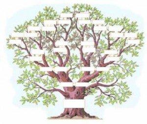 arbre-chene